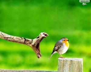 A cobra e o pássaro, atendimento publicitário e o cliente respectivamente.